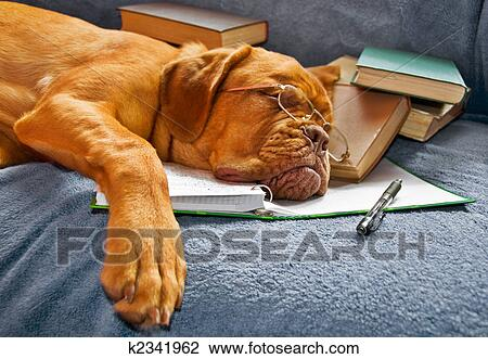 Stock Photo - Dog Sleeping after Studying. Fotosearch - Search Stock Photography, Print Pictures, Images, and Photo Clip Art