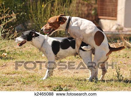 有狗的做爱电影没有_二, purebred, 千斤顶, russel, 地产册, 做爱, 在中, a, 花园