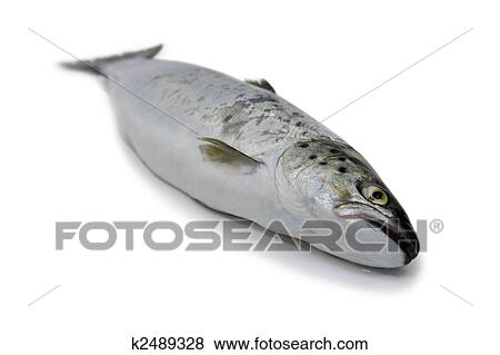 Pictures Of Fish Trout Body K2489328 Search Stock
