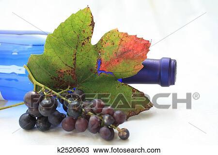 图吧- 秋季, 彩色, 葡萄树叶图片