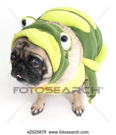 青蛙, pug, 粘贴舌头