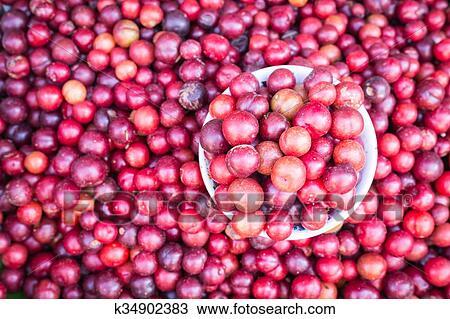图吧- 地方, 泰国人, 森林, 浆果水果, 在中, chiang mai, 市场.图片