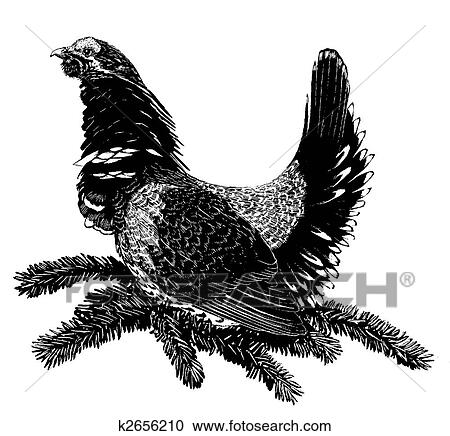 Sage grouse drawing - photo#41