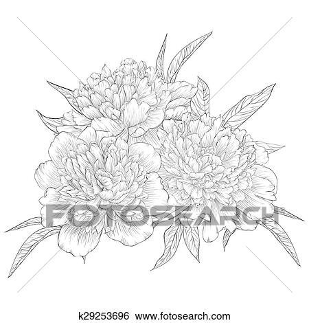 Pivoine Fleur Croquis Dessin De Main Vecteur Pivoine