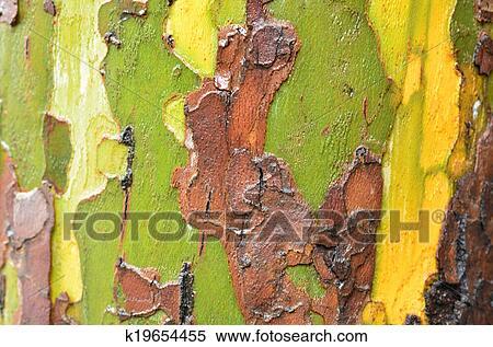 banque d 39 image arbre eucalyptus k19654455 recherchez des photos des images des. Black Bedroom Furniture Sets. Home Design Ideas