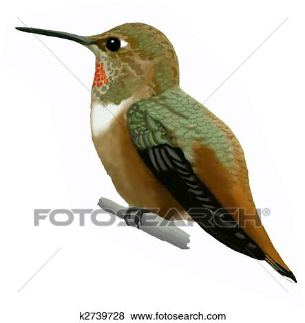 Rufous hummingbird drawing - photo#40
