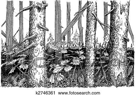 Klipart - ihličnatý strom, les. fotosearch - prehľadávaj klip art