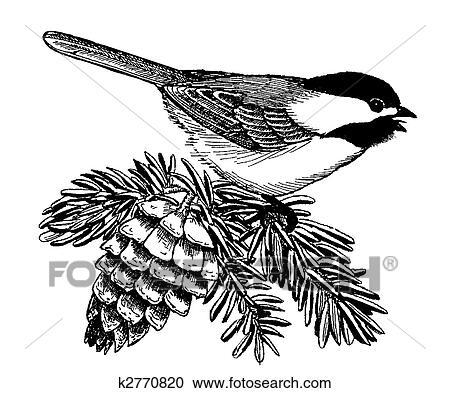 stock illustrations of black capped chickadee k2770820 search rh fotosearch com Chickadee Tattoo black capped chickadee clipart