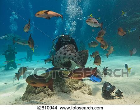 Stock photo of diver feeding fish on great barrier reef for Diving and fishing mural