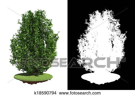 Bush Drawings Drawing Green Bush on White