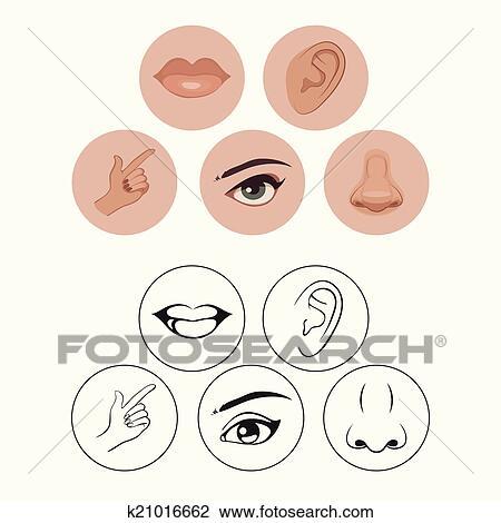 Clipart of Five senses icon set - Vector Illustration k13812434 ...