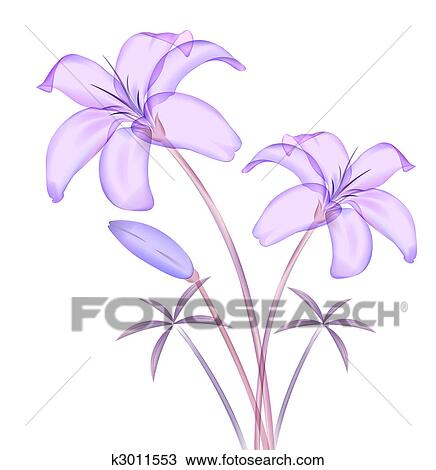 drawing of calla lily k3011553 search clipart