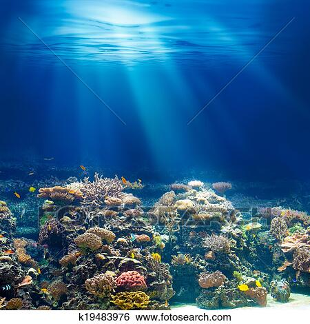 Stock images of sea or ocean underwater coral reef for Ocean images