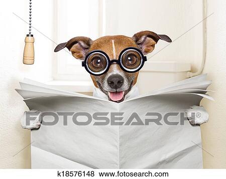 bilder hund toilette k18576148 suche stockfotos bilder print fotos und foto clipart. Black Bedroom Furniture Sets. Home Design Ideas