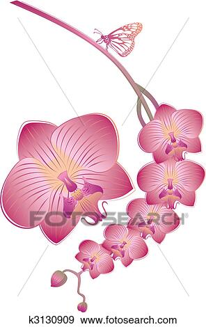Clip Art of vector orchid k3130909 - Search Clipart, Illustration ...