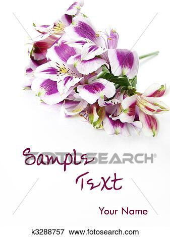 Picture of white and purple alstroemeria flowers card background picture white and purple alstroemeria flowers card background fotosearch search stock photography mightylinksfo Gallery