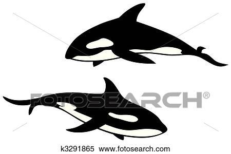 clipart of killer whale k3291865 search clip art illustration rh fotosearch com killer whale clipart killer whale clipart black and white