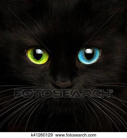 创意摄影图片库 - 黑色的猫, 带, 眼睛, 在中, 不同, 颜色, closeup.