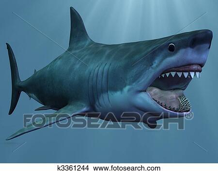 Disegni gran squalo bianco k3361244 cerca for Disegno squalo