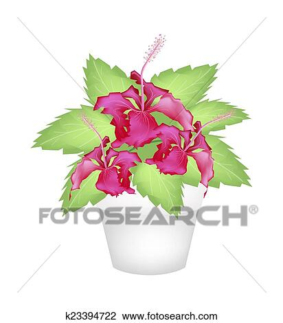 clipart frais rouges hibiscus dans a terre cuite pot k23394722 recherchez des cliparts. Black Bedroom Furniture Sets. Home Design Ideas