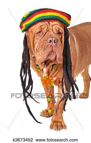 Banque de Photo - rastafarian, chien k3673452 - Recherchez