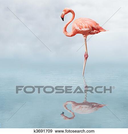 中�_创意摄影图片库 - 火烈鸟, 在中, 池塘