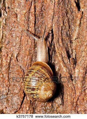 Closeup, di, uno, lumaca, su, uno, bagnato, corteccia albero, con, uno