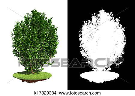Bush Drawings Drawing Green Bush Isolated