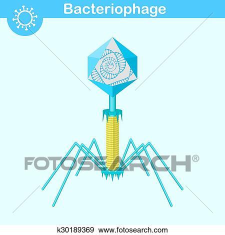Bacteriophage Diagram 73144 Usbdata