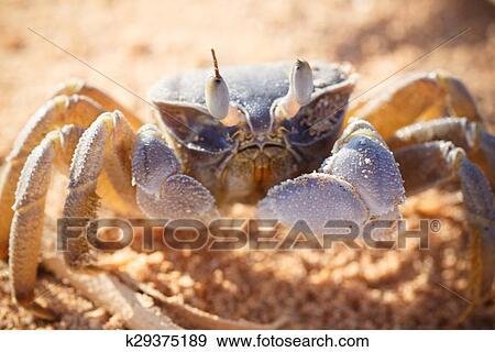 фото крабов в красном море
