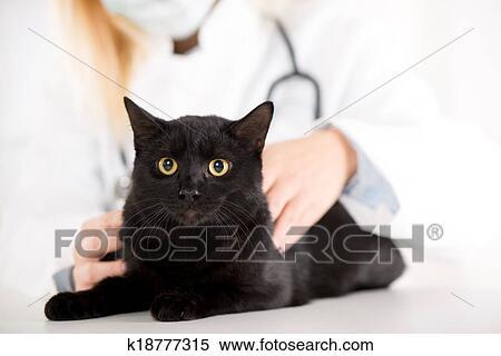 cat sensor spray