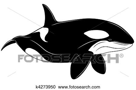 Clipart of Killer whale k4273950 - Search Clip Art, Illustration ...