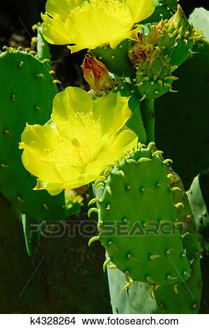 banque de photo cactus fleurs et feuilles composition beau fleurs les jaune. Black Bedroom Furniture Sets. Home Design Ideas