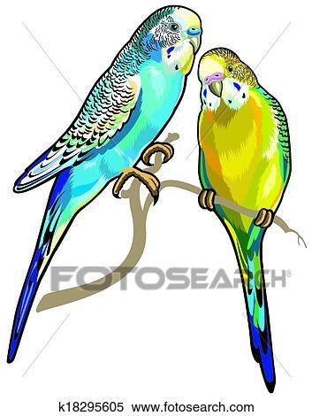 clipart of budgerigars k18295605 search clip art illustration rh fotosearch com Cartoon Parakeet Budgerigar Parakeet
