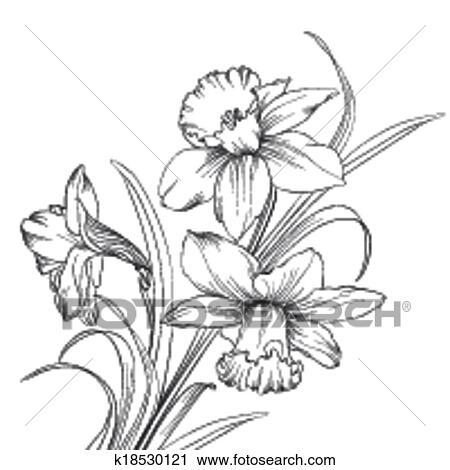 Clipart jonquille fleur ou narcisse isol sur - Dessin jonquille fleur ...