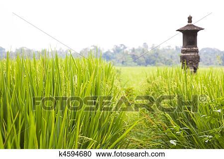 fotosearch - 搜索照片,图片,壁纸,图象及照片剪贴画