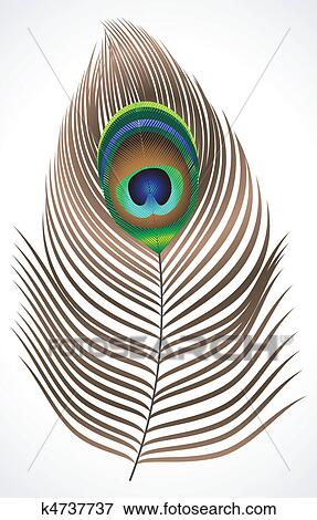 Clip Art of abstract peacock feather k4737737 - Search ...