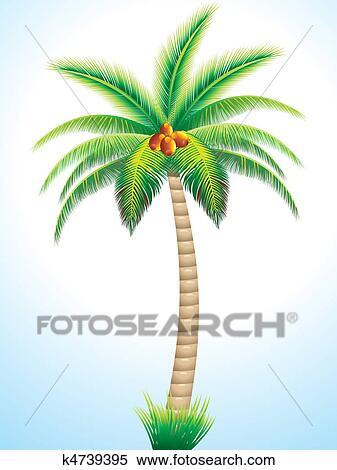 Banque d 39 illustrations d taill palmier noix coco - Palmier noix de coco ...