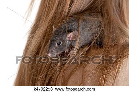图吧- 老鼠, 在中, 头发, 在中, the, 女孩.图片