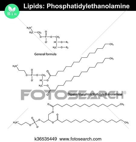 phospholipid molecule