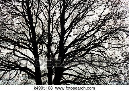 Picture bare branches of a tree in winter fotosearch search stock