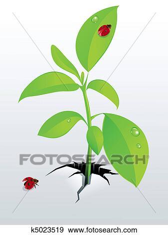 剪贴画 - 年轻, 绿色的植物, 同时,, ladybird图片