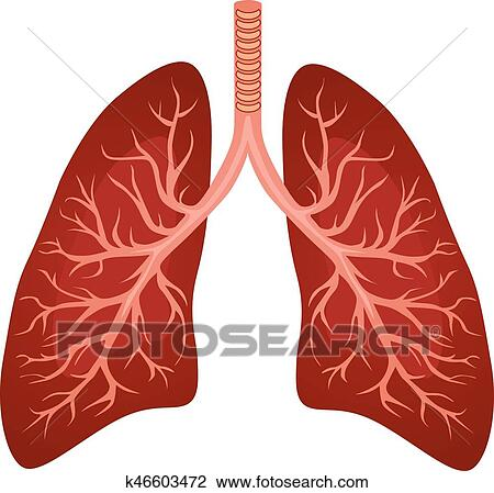 clipart of human lungs organ k46603472 search clip art rh fotosearch com healthy lungs clipart lungs clipart images