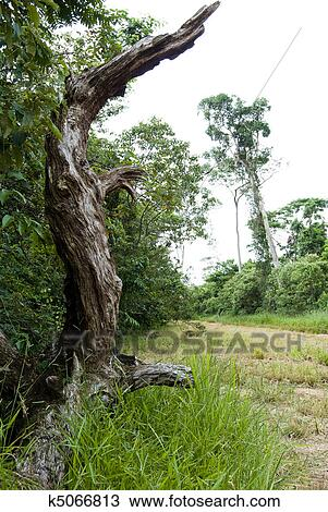 Stock Photo of Deforestation k5066813 - Search Stock ...