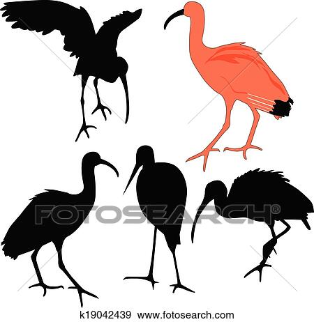 Ibis Bird Illustrations amp Vectors  dreamstimecom