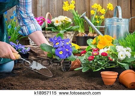 Archivio immagini giardiniere piantatura fiori for Immagini giardiniere