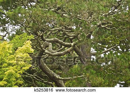 banque d 39 images tordu arbre brances plomb les oeil