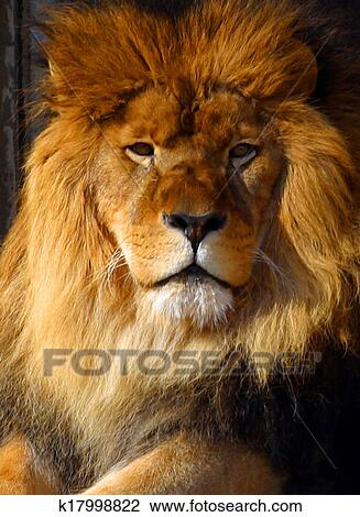 Le roi predateur