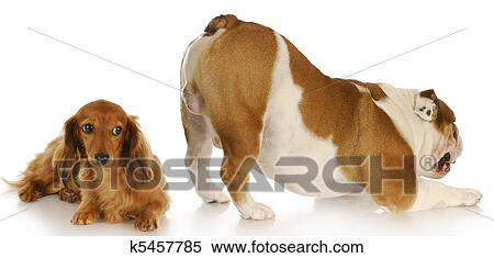 Stock Image of two dogs k5457785 - Search Stock Photos ...