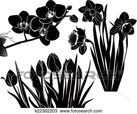 drawing tulips daffodils orchid fotosearch search clipart illustration fine art prints